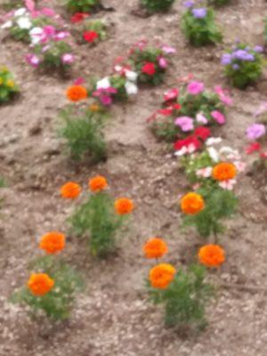 花壇づくり